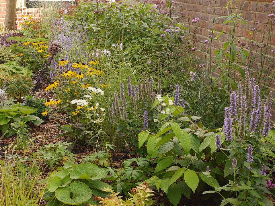 Front Garden Planting, Reigate - Carol Bridges